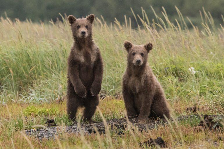 bilis de osos contra coronavirus anthony-renovato-unsplash
