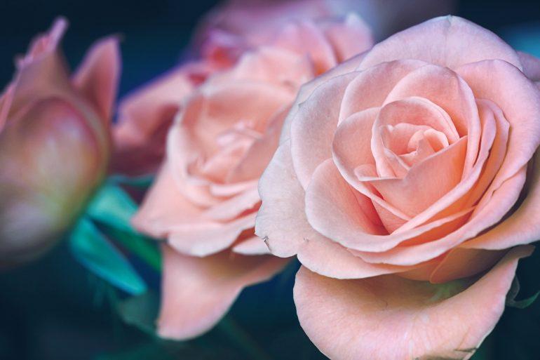 caja-de-flores-gerrit-klein-unsplash