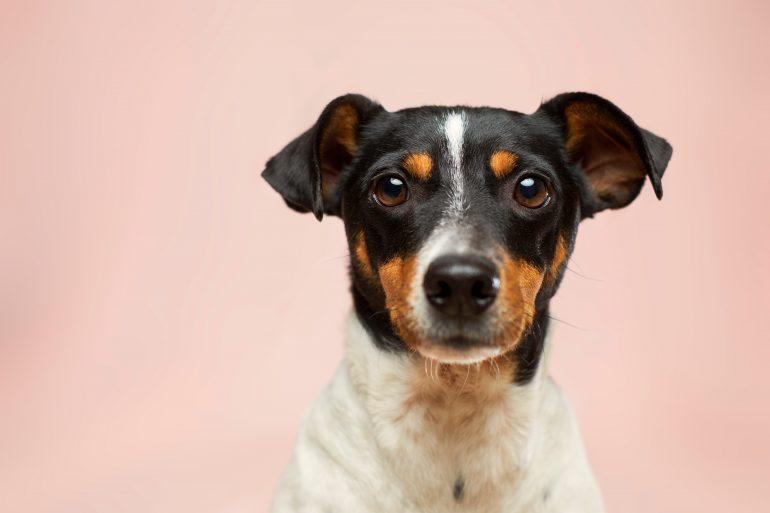 china-perros-ganado-foto-victor-grabarczyk-unsplash