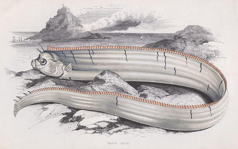 ¿El pez remo predice las catástrofes mundiales? Foto Getty Images