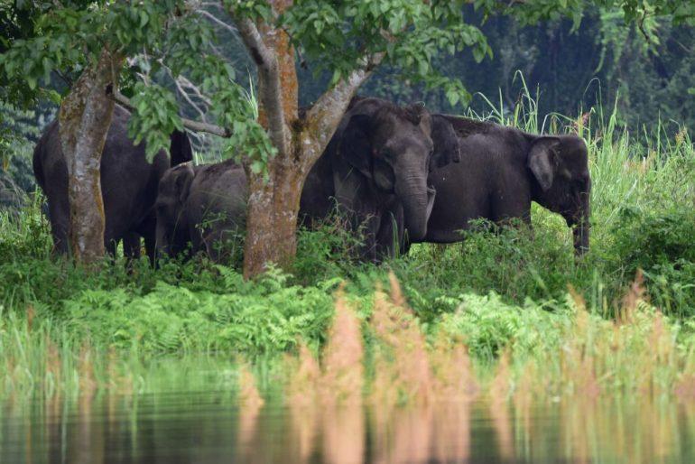 mueren-275-elefantes-botsana-científicos-elefante