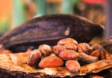 Algunas curiosidades sobre el preciado cacao