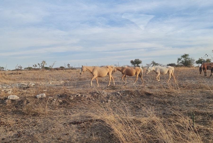 Qué es carne orgánica Cañada de la Virgen caballos