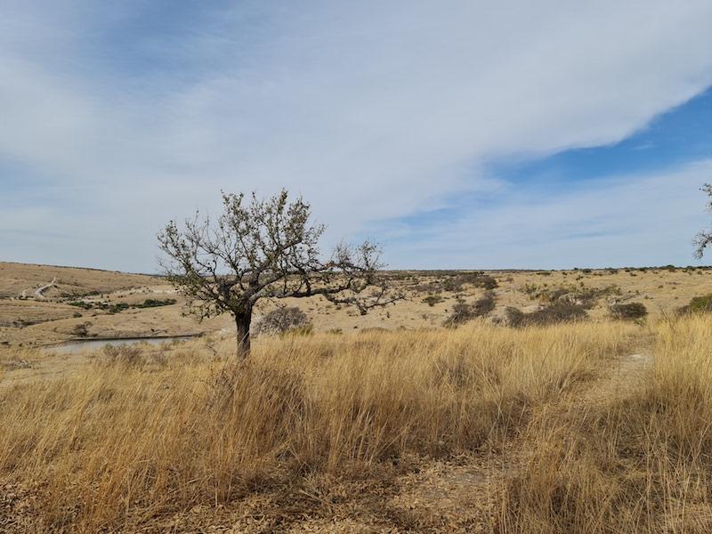 Qué es carne orgánica Cañada de la Virgen rancho