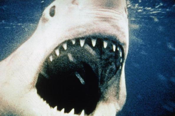 detalle del tiburon de steven spielberg